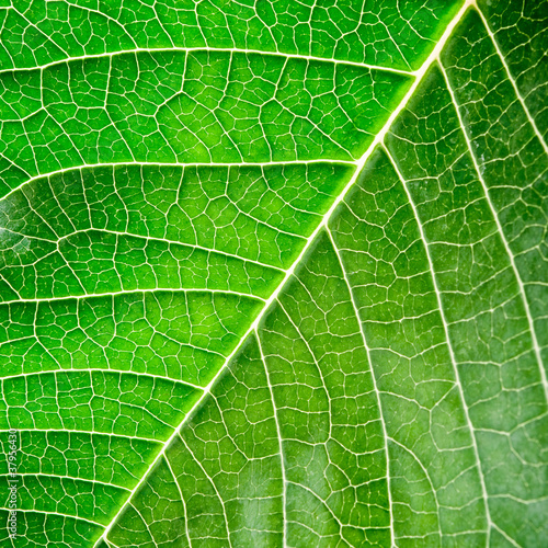 poster of Green leaf with organic pattern