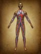 Human Blood Circulation Grunge