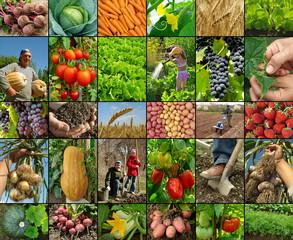 farming collage