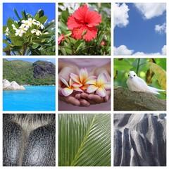Souvenirs des Seychelles