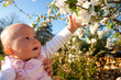A baby girl amongst the apple blossom