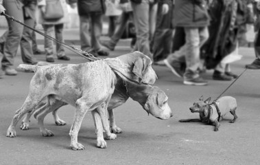 Dogs on the leash.