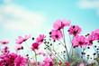 Fototapeten,gänseblümchen,wildblume,blume,blühen
