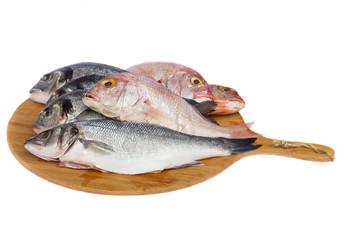 choise of fresh fish
