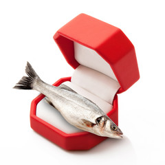 pesce in scatola