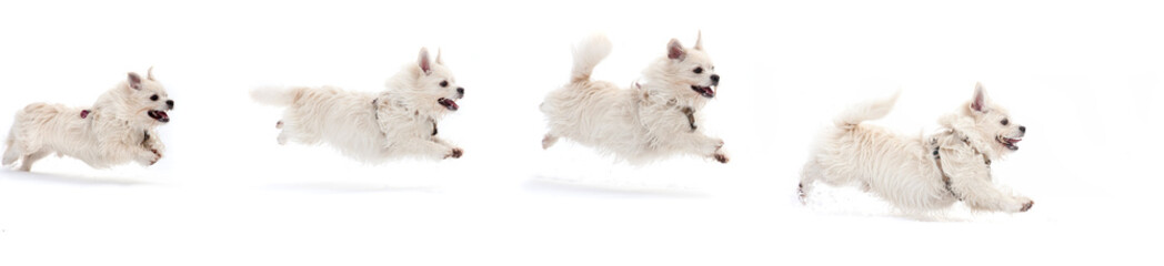 a running dog on white background
