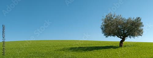 Aluminium Olijfboom Panoramica Ulivo con la sua ombra