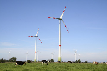 Windräder und Kuhweide
