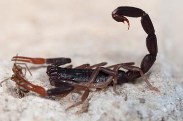 Skorpion 2