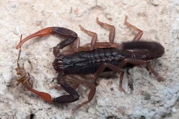 Skorpion 1