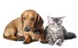 Quadro Cat and dog