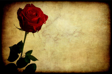 Rosa rossa, texture retro