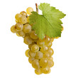 Fresh bunch of white wine on a white background