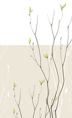 Spring fragile twigs