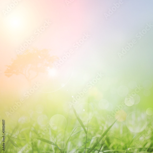 Spring or summer nature sunset background