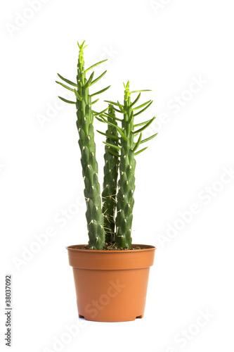 Foto op Canvas Cactus Cactus.