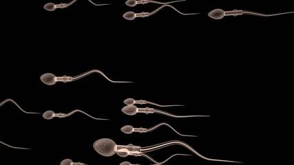 spermatozoi 3d