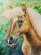 Haflinger horse watercolor painted