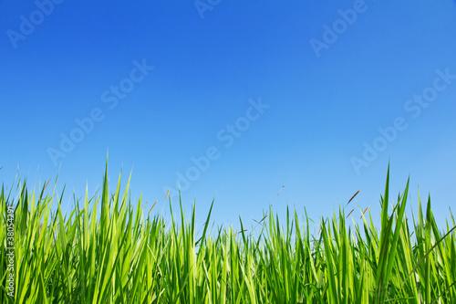 Fototapeten,bauernhof,feld,foliage,gras