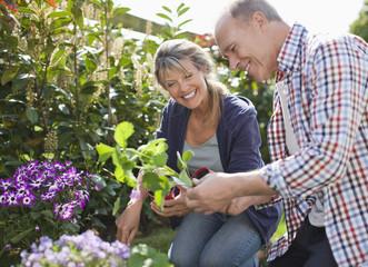 Senior couple planting in garden