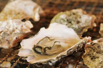 生牡蠣の網焼き