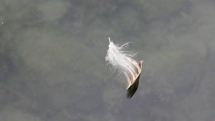 水に浮かぶ羽根