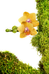 Orchidee Blume Moos Werbung Pflanze