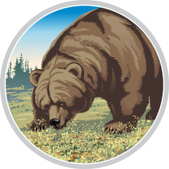 illustration of a bear chewing berries