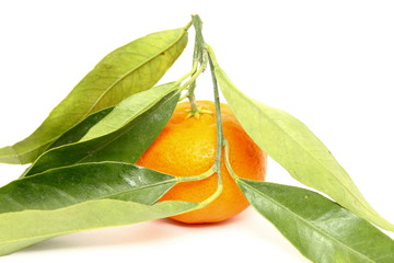 Juicy mandarin with green leaves