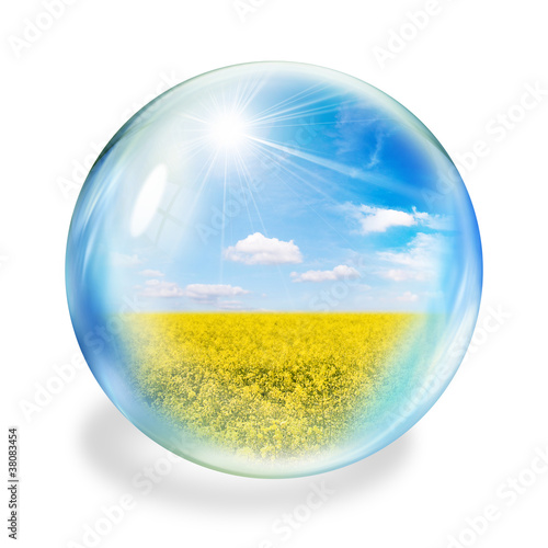 oilseed bubble