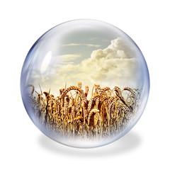 wheat glass ball