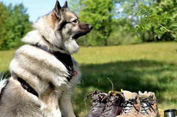 Hund  Wiese Frühling Schuhe