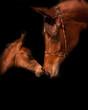 Fototapeten,viehweide,tier,pferd,ranch