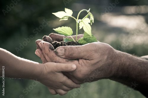 Hands of elderly man and baby holding a plant
