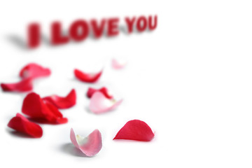 Rose petals with I love you phrase