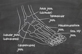 ankle poster