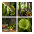 serre, serres, véranda, jardin, planter, maison, plante