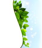 design of fresh green leaves