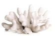 sea coral - 38105063