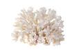 sea coral - 38105066
