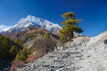 View on  the Annapurna mountain Nepal