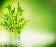 Fototapeten,grün,bambu,glücksdrache,wasser
