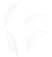 Vector drawing of four feathers isolated on white