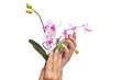 beauty Konzept - manikürte Hände halten Blumen