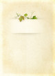 Wine list menu with grapes leafs - vintage background