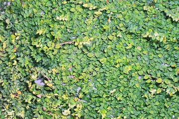 leaf texture on wall