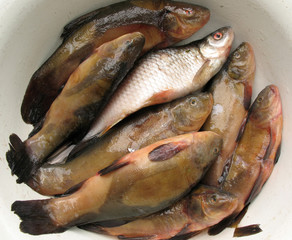 Fresh water fish in a bowl