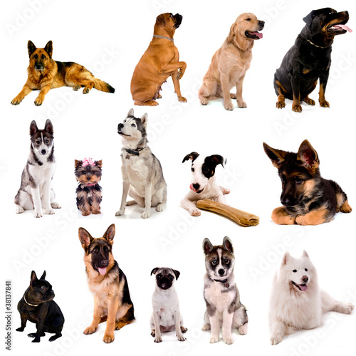 collage animaux - chiens