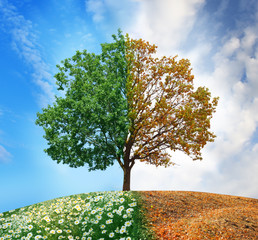 Conceptual tree in summer and autumn