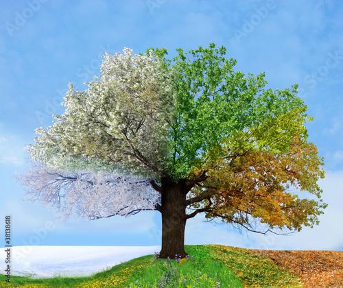 Papiers peints Arbre Four season tree